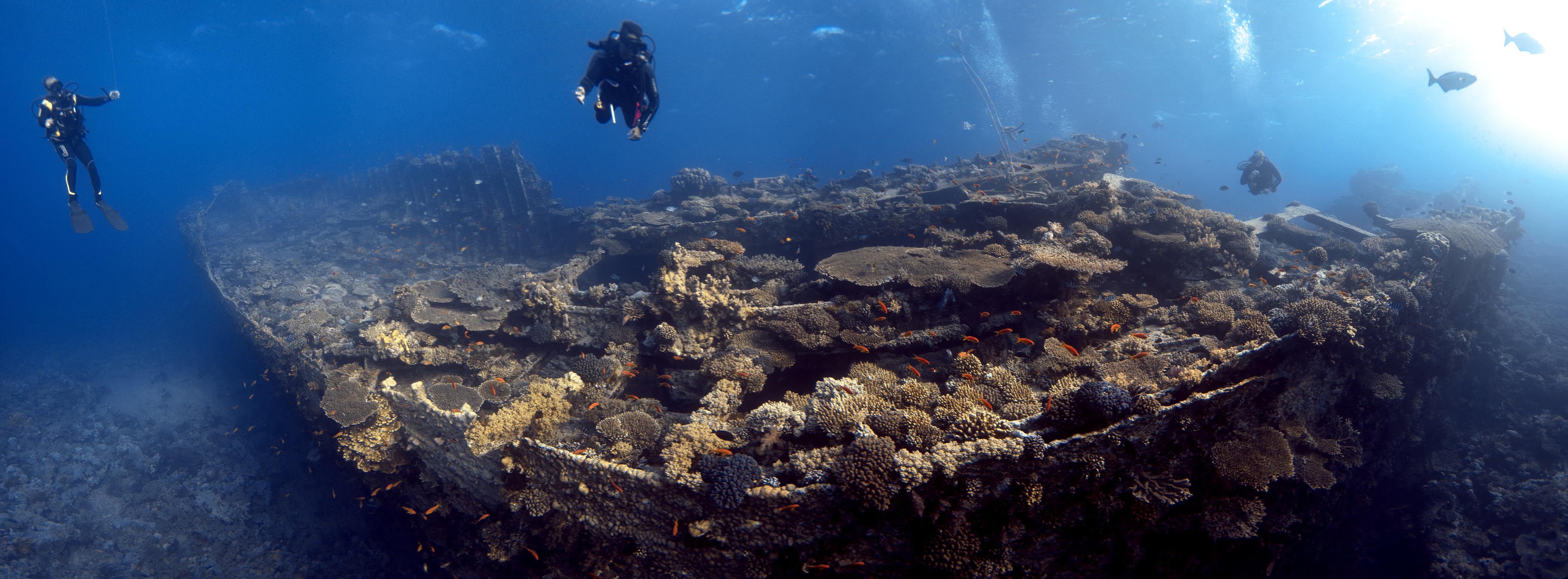 Cargaison de corail