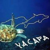 Yacapa