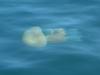 Méduse depuis la surface