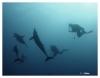 danse avec les dauphins egypte