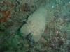 Cabos de palos Cartagène 20/03/2011