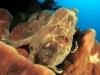 Frog aux maldives 2010
