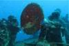 Guadeloupe juil2012/Malendure/Le Franjack