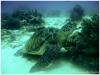 Plongées Philippines