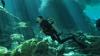 Votre serviteur, Cenote Yucatan