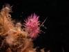 Nudibranche Turquie bodrum